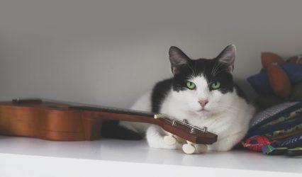 Blog 1 – Ukulele + Cats